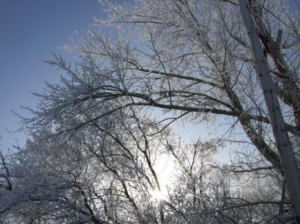 Winter in Saskatchewan