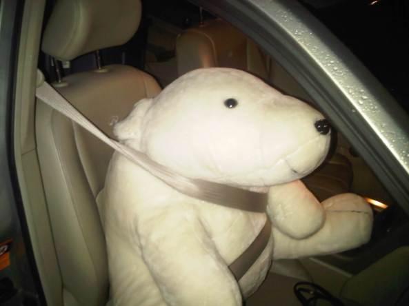 Pierre the Polar Bear