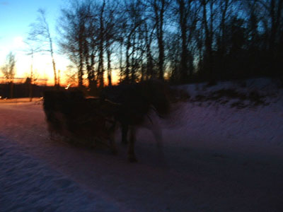 I know it's a little blurry, but this is horse-drawn carriage at Mont Royal