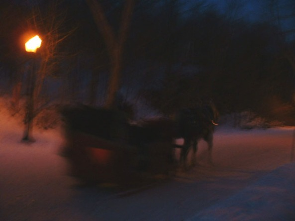 Horse Drawn Sleigh in Montreal